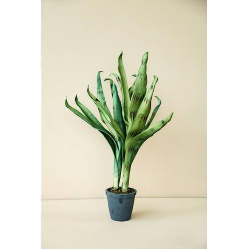Φυτό με γλαστράκι